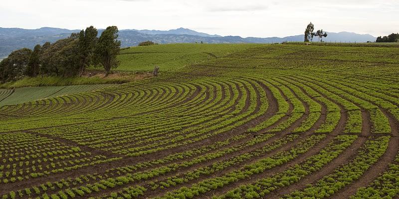 Central America farms for sale