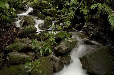 Waterfall in Dominica